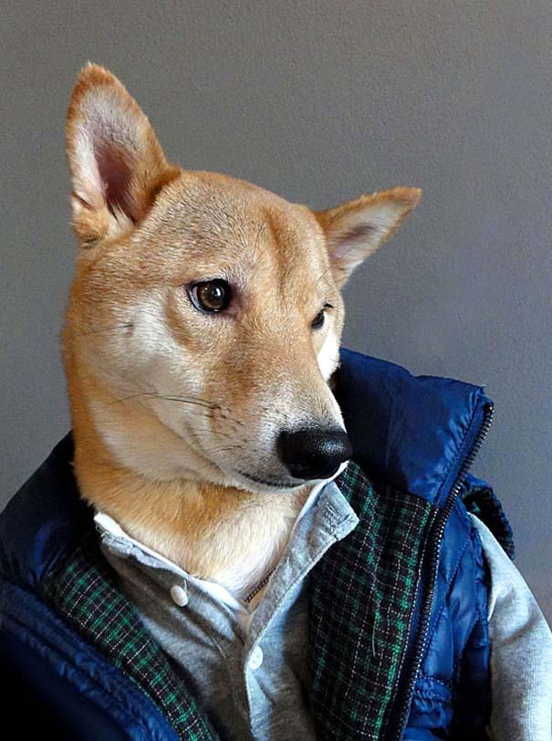 Ο πιο καλοντυμένος σκύλος στον κόσμο (1)