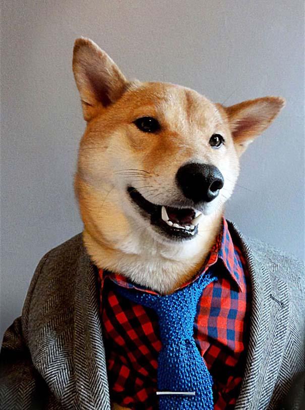 Ο πιο καλοντυμένος σκύλος στον κόσμο (2)