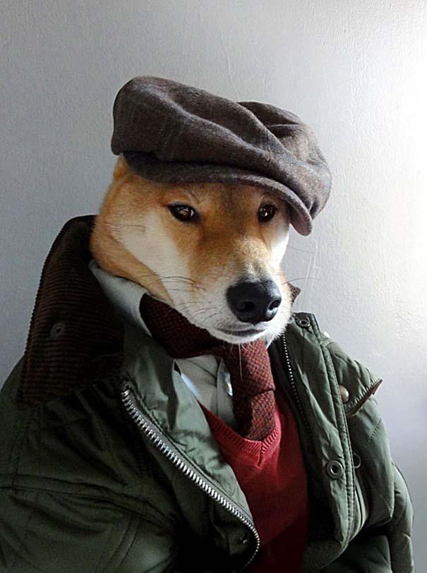 Ο πιο καλοντυμένος σκύλος στον κόσμο (4)