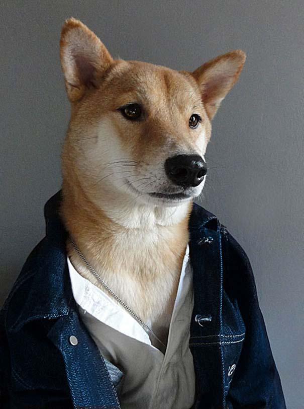 Ο πιο καλοντυμένος σκύλος στον κόσμο (5)