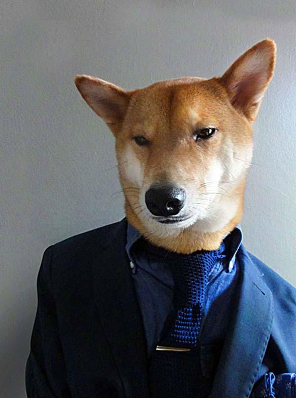 Ο πιο καλοντυμένος σκύλος στον κόσμο (6)