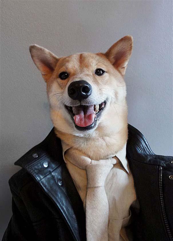 Ο πιο καλοντυμένος σκύλος στον κόσμο (7)