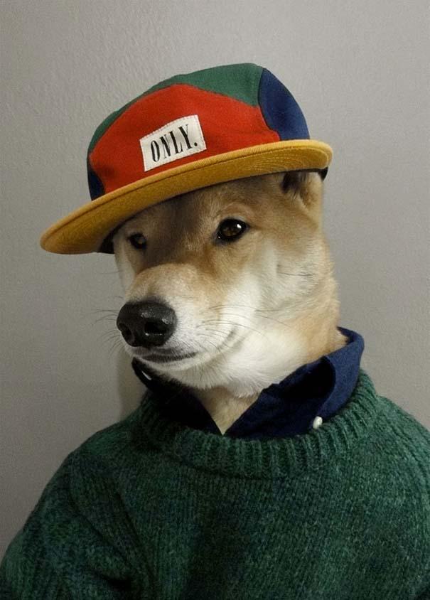 Ο πιο καλοντυμένος σκύλος στον κόσμο (8)