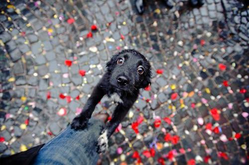 Σκύλοι σε απίθανες στιγμές (35)