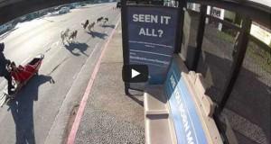 Η κορυφαία στάση λεωφορείου στον κόσμο (Video)