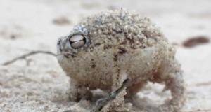 Ο πιο χαριτωμένος βάτραχος στον κόσμο (Video)