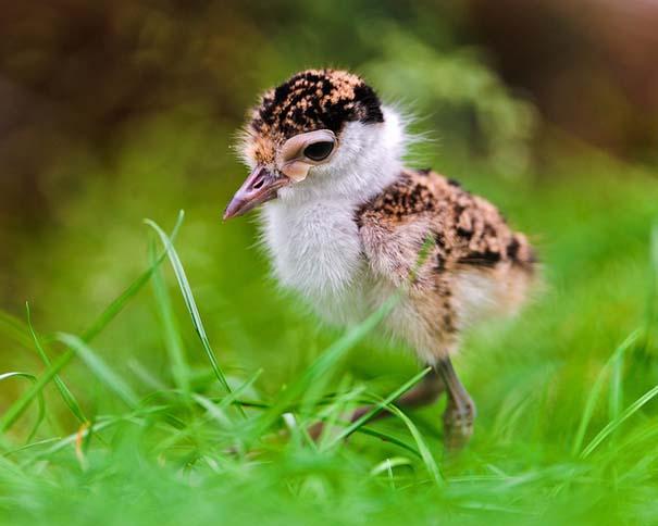Ακαταμάχητα μωρά ζώων (2)