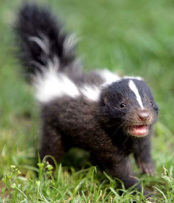 Ακαταμάχητα μωρά ζώων (4)