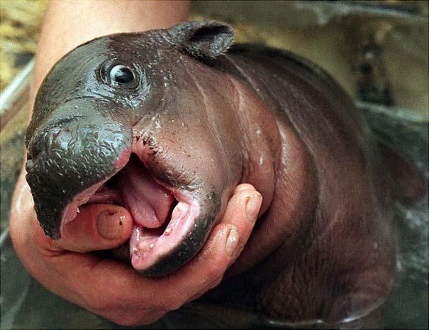 Ακαταμάχητα μωρά ζώων (12)