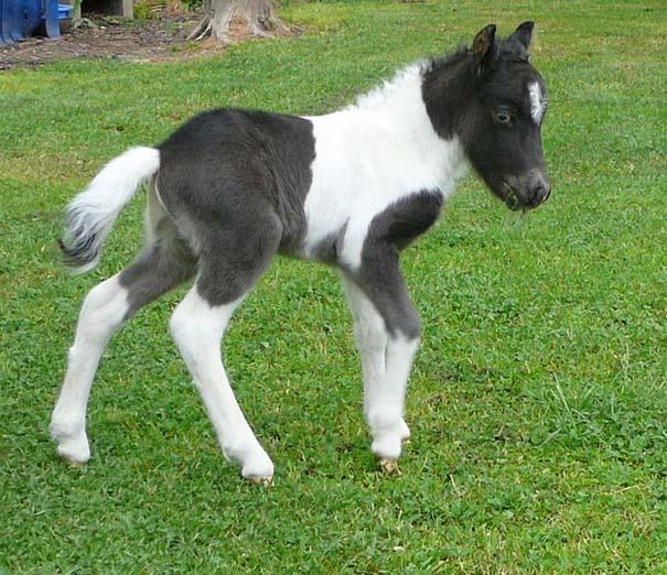 Ακαταμάχητα μωρά ζώων (14)
