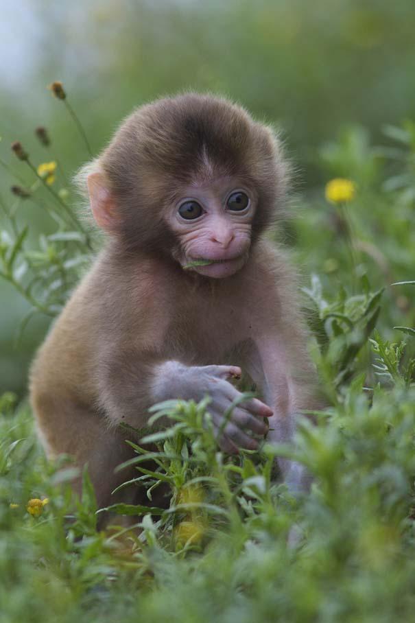 Ακαταμάχητα μωρά ζώων (15)