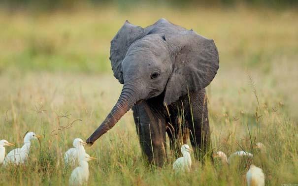 Ακαταμάχητα μωρά ζώων (16)