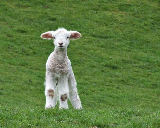 Ακαταμάχητα μωρά ζώων (20)