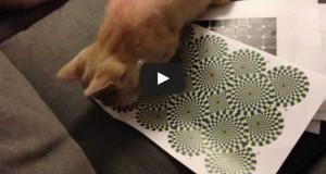 Η αντίδραση μιας γάτας σε οφθαλμαπάτη (Video)