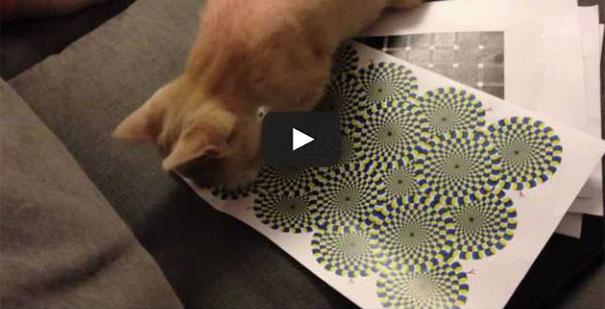 Η αντίδραση μιας γάτας σε οφθαλμαπάτη (1)
