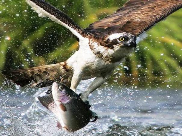 25 εντυπωσιακές φωτογραφίες ζώων εν δράσει (1)