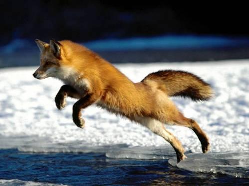25 εντυπωσιακές φωτογραφίες ζώων εν δράσει (2)