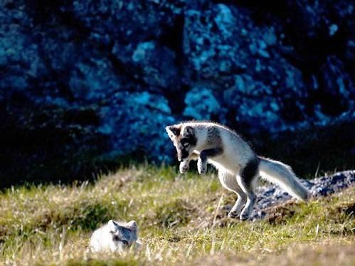 25 εντυπωσιακές φωτογραφίες ζώων εν δράσει (3)