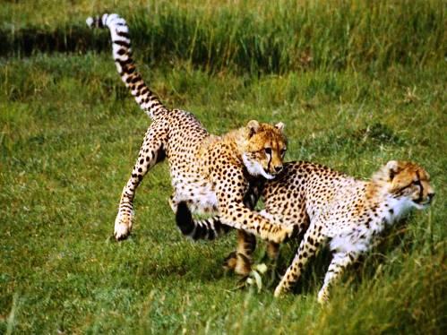 25 εντυπωσιακές φωτογραφίες ζώων εν δράσει (5)