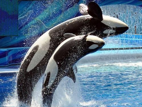 25 εντυπωσιακές φωτογραφίες ζώων εν δράσει (6)