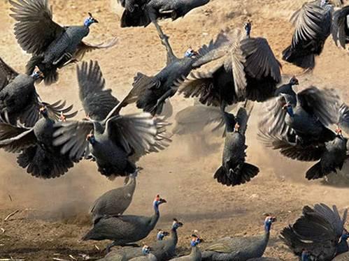 25 εντυπωσιακές φωτογραφίες ζώων εν δράσει (7)