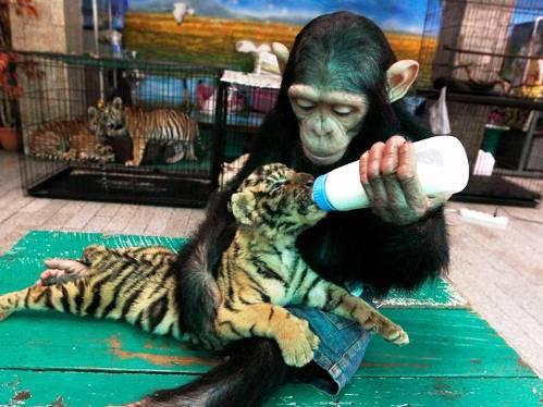 25 εντυπωσιακές φωτογραφίες ζώων εν δράσει (8)