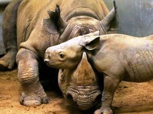 25 εντυπωσιακές φωτογραφίες ζώων εν δράσει (9)