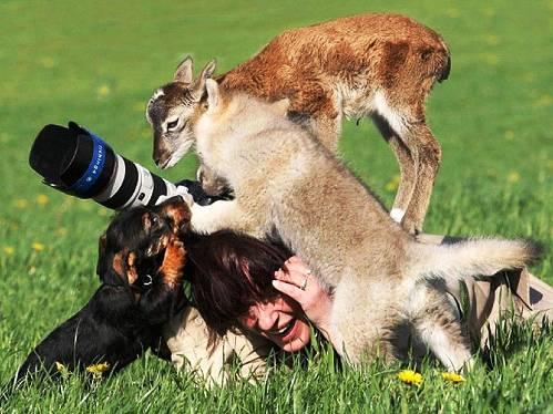 25 εντυπωσιακές φωτογραφίες ζώων εν δράσει (11)
