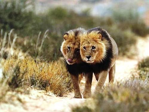 25 εντυπωσιακές φωτογραφίες ζώων εν δράσει (12)