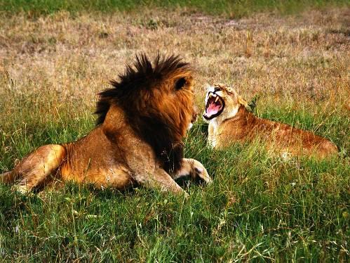 25 εντυπωσιακές φωτογραφίες ζώων εν δράσει (13)