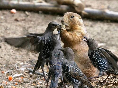 25 εντυπωσιακές φωτογραφίες ζώων εν δράσει (14)