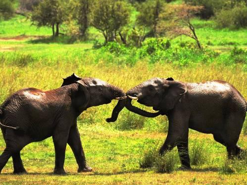 25 εντυπωσιακές φωτογραφίες ζώων εν δράσει (15)