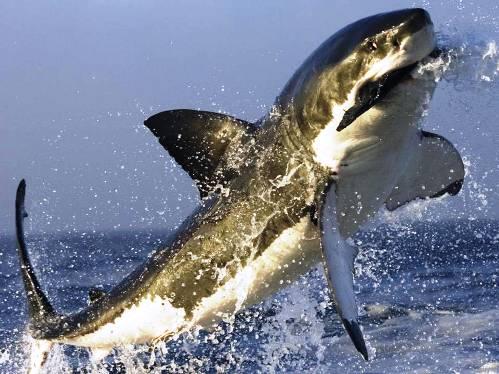 25 εντυπωσιακές φωτογραφίες ζώων εν δράσει (16)