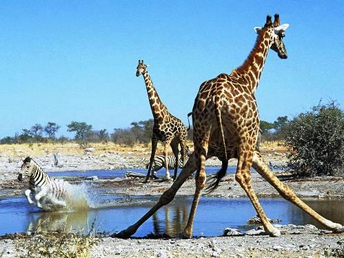 25 εντυπωσιακές φωτογραφίες ζώων εν δράσει (17)