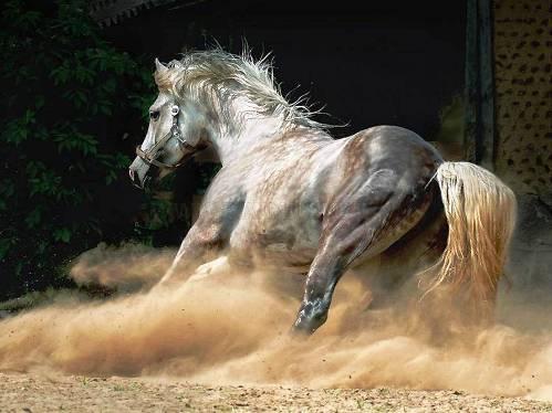 25 εντυπωσιακές φωτογραφίες ζώων εν δράσει (21)