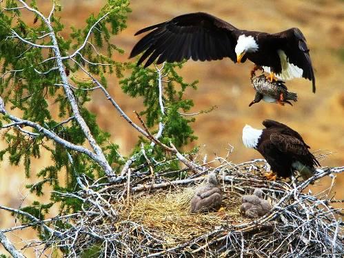 25 εντυπωσιακές φωτογραφίες ζώων εν δράσει (22)