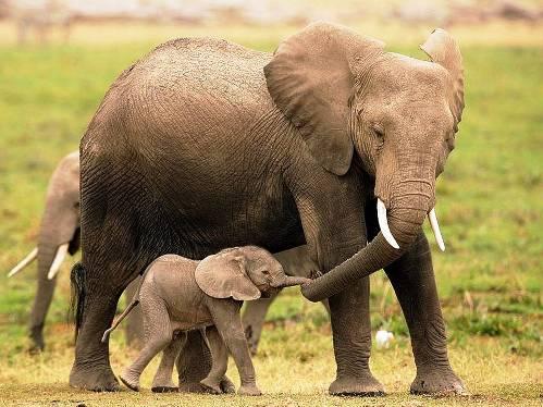 25 εντυπωσιακές φωτογραφίες ζώων εν δράσει (23)