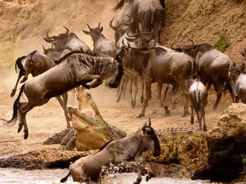 25 εντυπωσιακές φωτογραφίες ζώων εν δράσει (24)