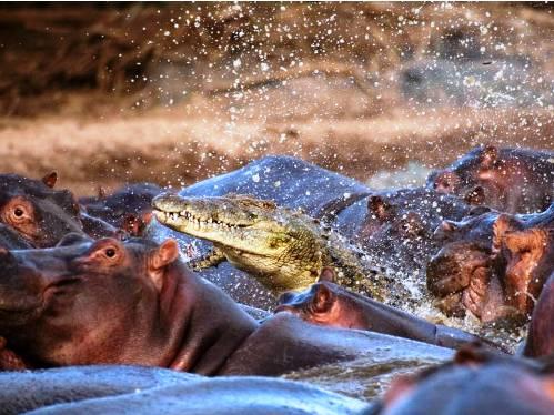 25 εντυπωσιακές φωτογραφίες ζώων εν δράσει (25)