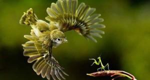 Φωτογραφίες ζώων τραβηγμένες την κατάλληλη στιγμή #2