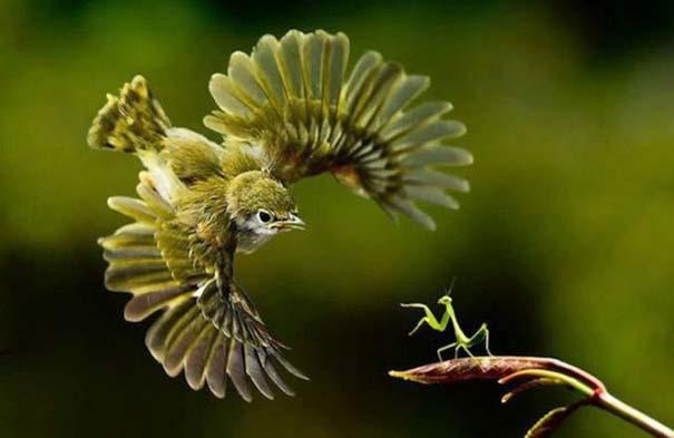 Φωτογραφίες ζώων τραβηγμένες την κατάλληλη στιγμή (1)