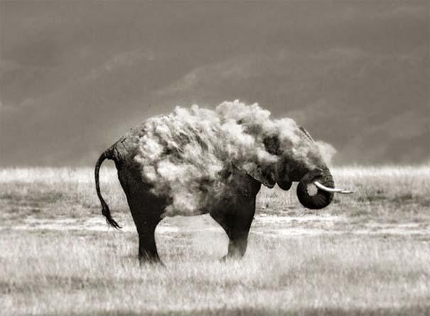 Φωτογραφίες ζώων τραβηγμένες την κατάλληλη στιγμή (14)