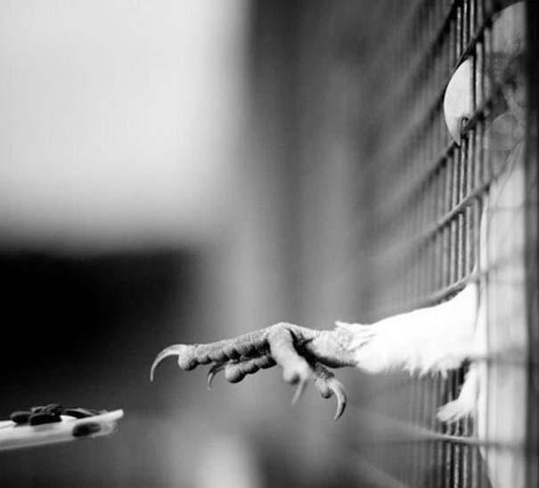 Φωτογραφίες ζώων τραβηγμένες την κατάλληλη στιγμή (16)