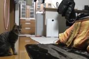 Η γάτα τερματοφύλακας!