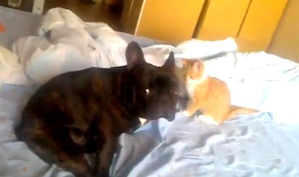 Γατάκι δολοφόνος
