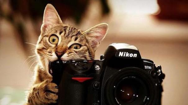 Γάτες (1)