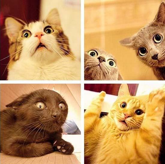 Γάτες (24)