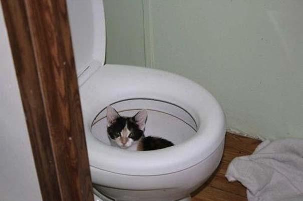 Γάτες που... κάνουν τα δικά τους! (23)