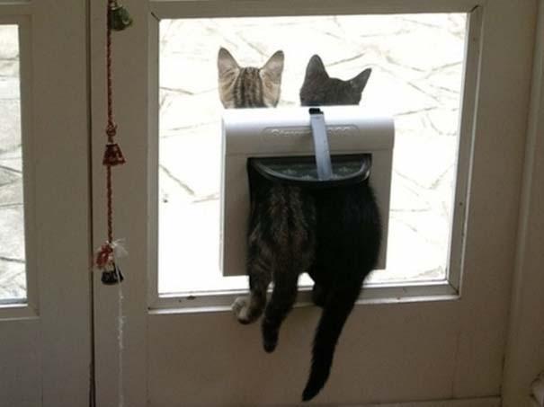 Γάτες που... κάνουν τα δικά τους! (24)