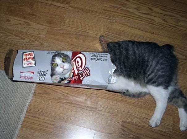 Γάτες που... κάνουν τα δικά τους! (26)